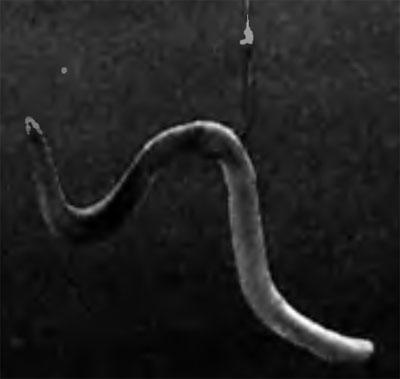 Разведение червей | Рыбалка - любовь на всю жизнь
